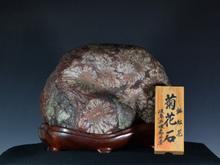 根尾 赤花菊花石