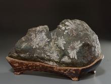 菊花石 大石